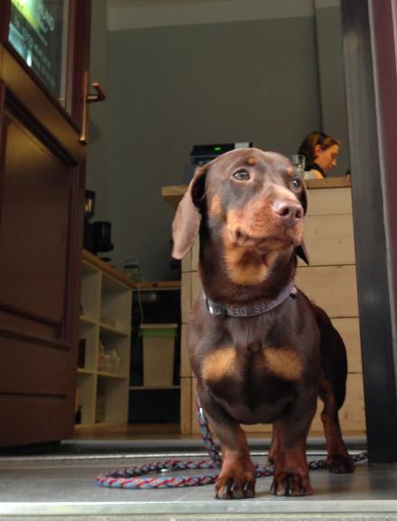 kalterhund_stefan